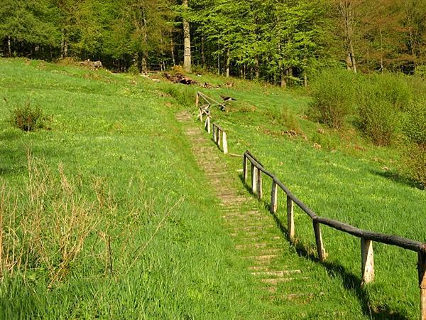Aufstieg vom Bandweg zur Lutherbuche