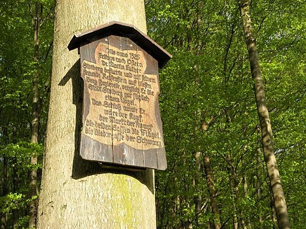 Tafel an der Lutherbuche
