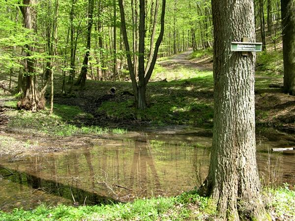 Röhrenteich bei Stolberg Harz