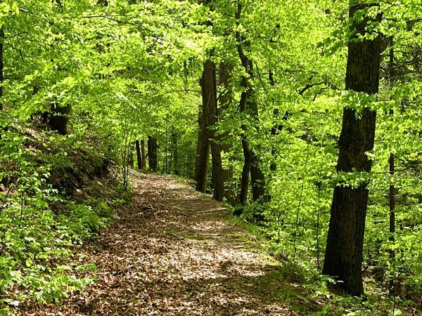 auf dem Paul Hepach-Weg zurück zum Stolberger Schloss