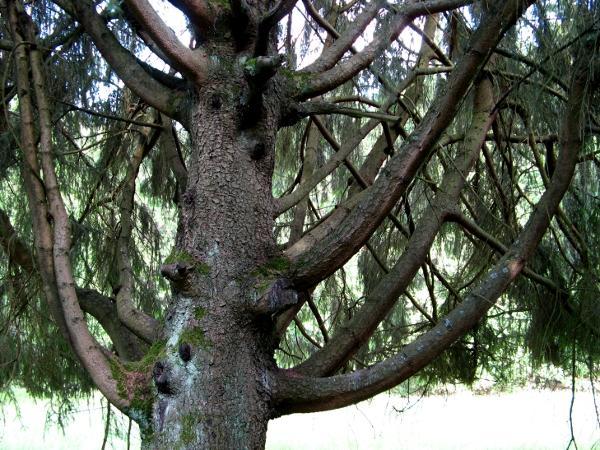 Baum im Harzgarten