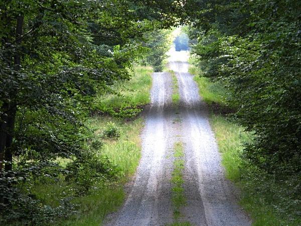 Der Karl-Lindau-Weg führt mehrere Kilometer geradeaus