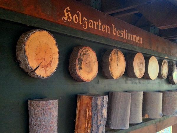 Station zum Erkennen der Holzarten