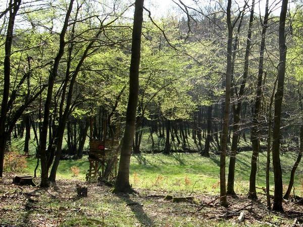Im idyllischen Wolfsbachtal