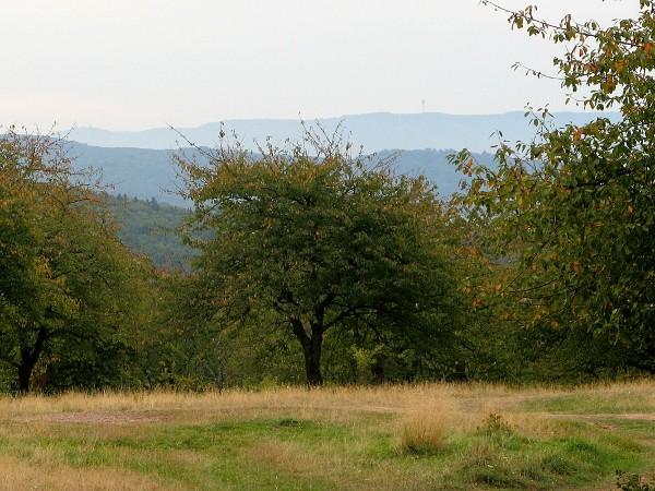 Blick über die goldene Aue bis zum Kyffhäusergebirge