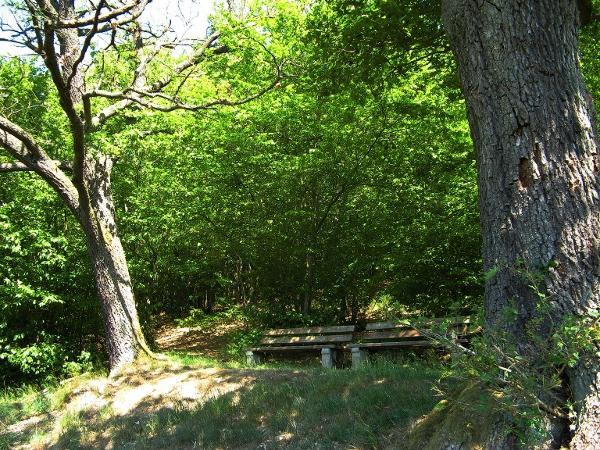Zwei Bänke unter schattigen alten Bäumen laden an der Dornröschenbank zur Rast ein